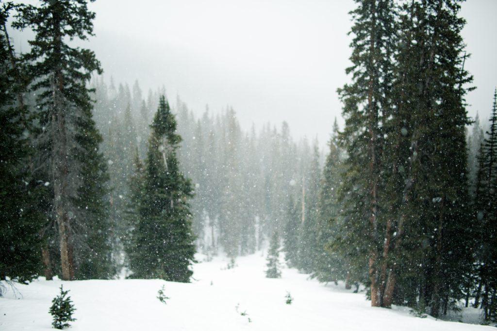 Biophilia in snowy forest scene, for biophilic design