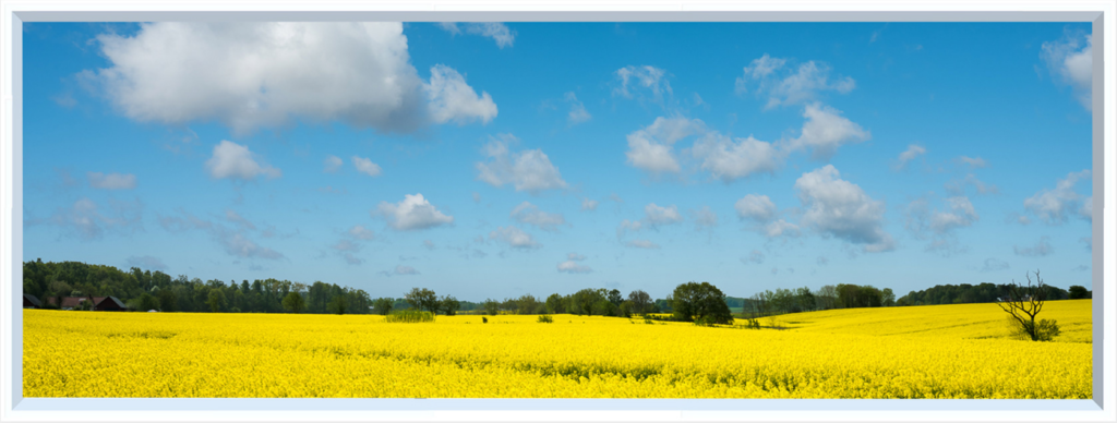 LED window imagery of yellow field under blue sky