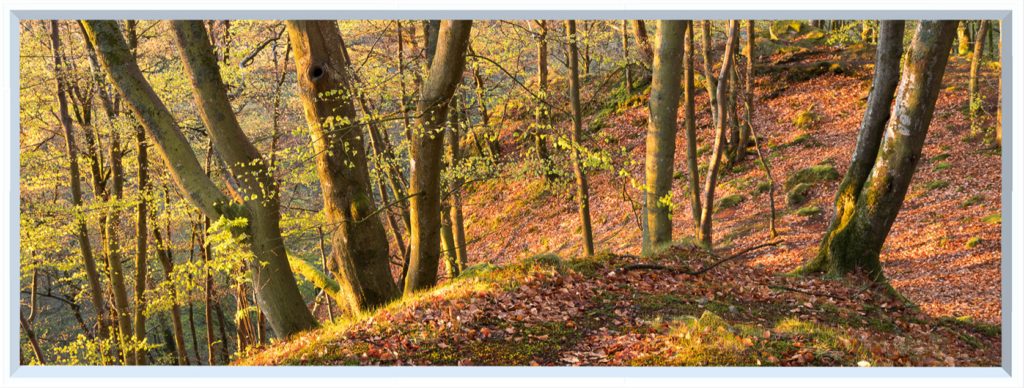 Wall visual of forest, trees and fallen leaves in Autumn