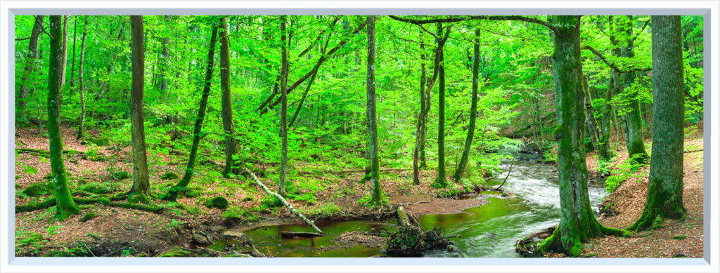 Bright forest image for wall with small river and vibrant green trees