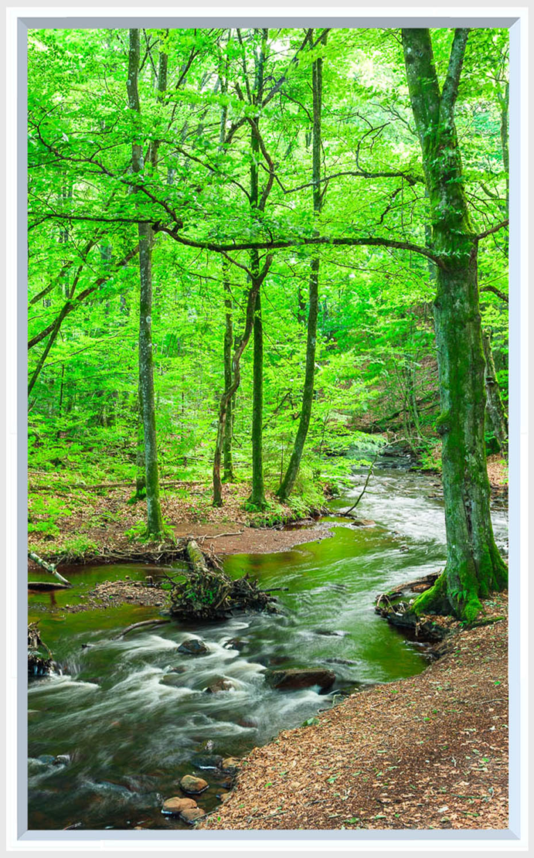 Fake window for office cubicle of a forest with green leaves and stream