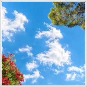 Red and green flowering trees with a blue sky as a LED sky ceiling panel