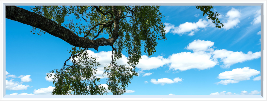 Large tree trunk with deep green leaves hanging in a blue sky scene