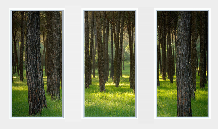 Static imagery of trees in a forest for a LED window