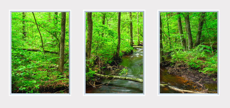 Green trees by a small river in a forest scenery for static wall art