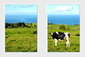 Twin window panels with countryside seaside design featuring cows to make a windowless room better