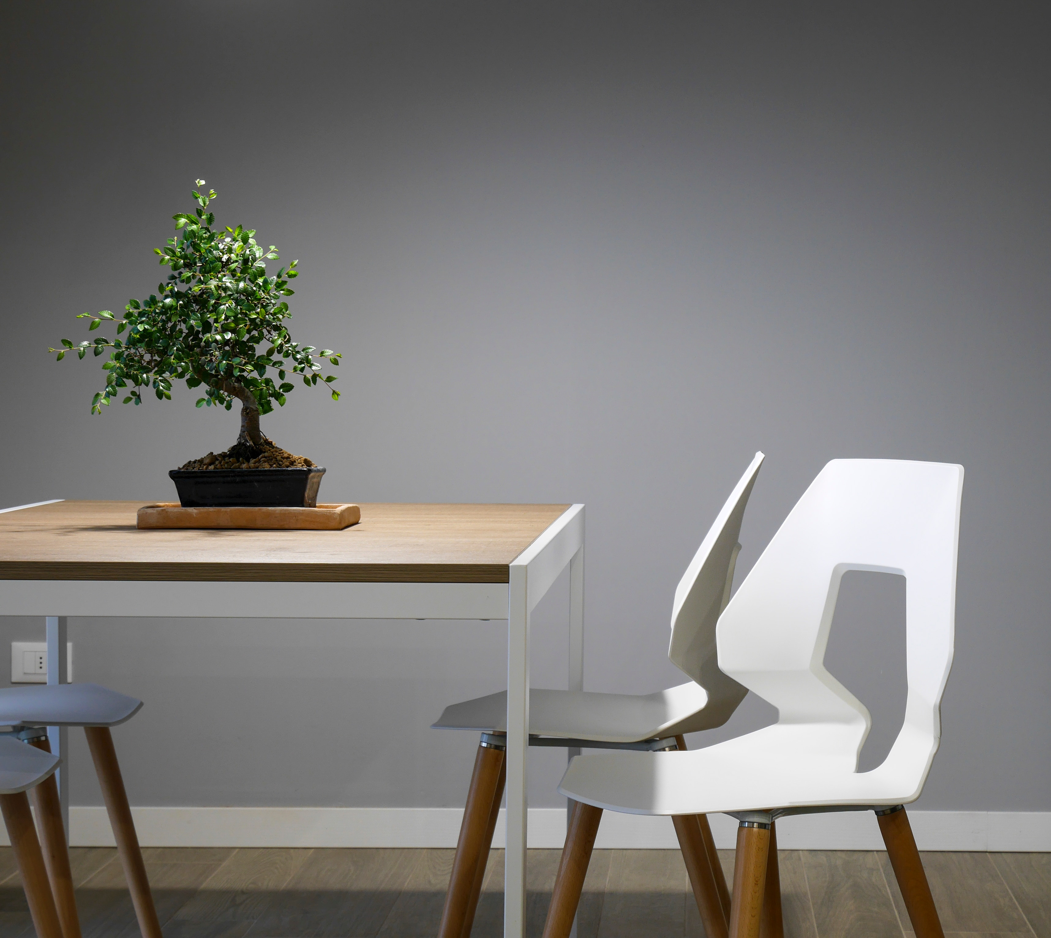 Chairs and table with tiny decorative tree